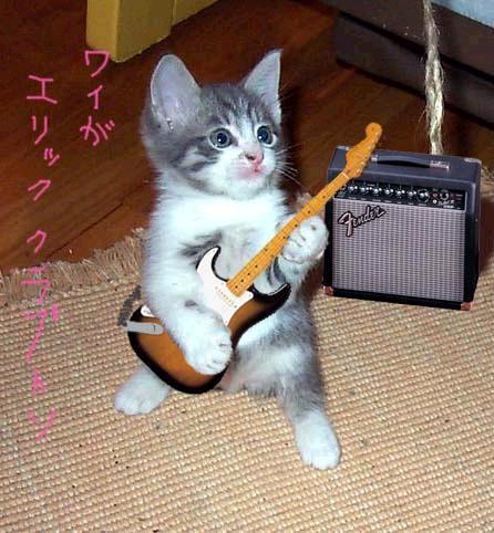 Il festival dei gattini su internet moviecamp for I gattini piccoli