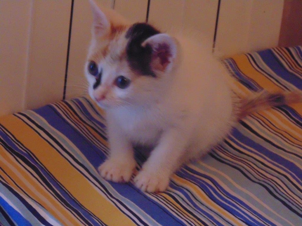 In Adozione Petit I Gattini Cercacasa